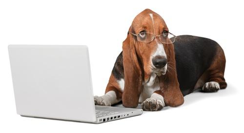 chien portant une paire de lunette devant un ordinateur portable